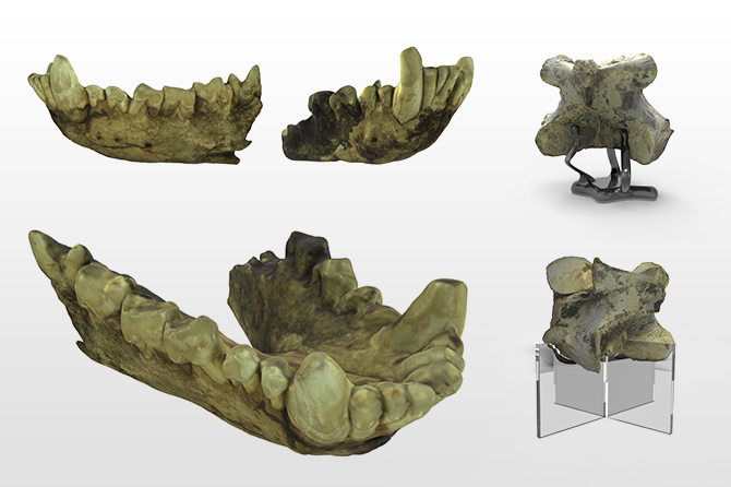 3D Fossil Scanning